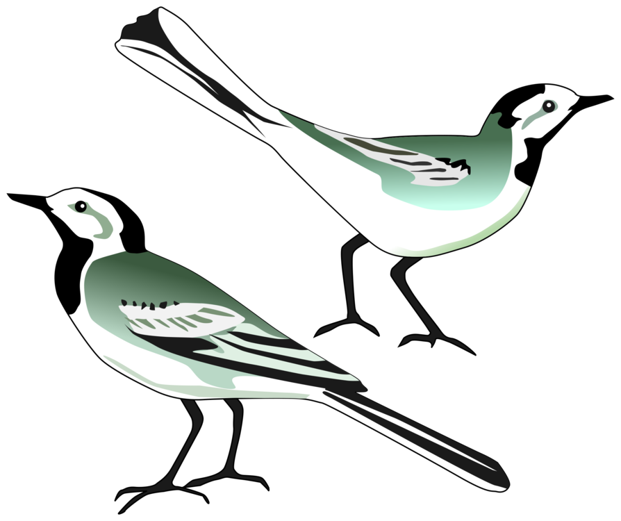 894x750 Bird Nest White Wagtail Computer Icons Drawing Cc0