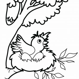 300x300 Coloring Pictures Of Bird Nests Refrence Bird Nest Drawing