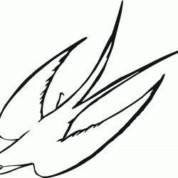 250x250 Funny Bird Drawing Cartoon Sketches Ladybird Nest Flying Robin
