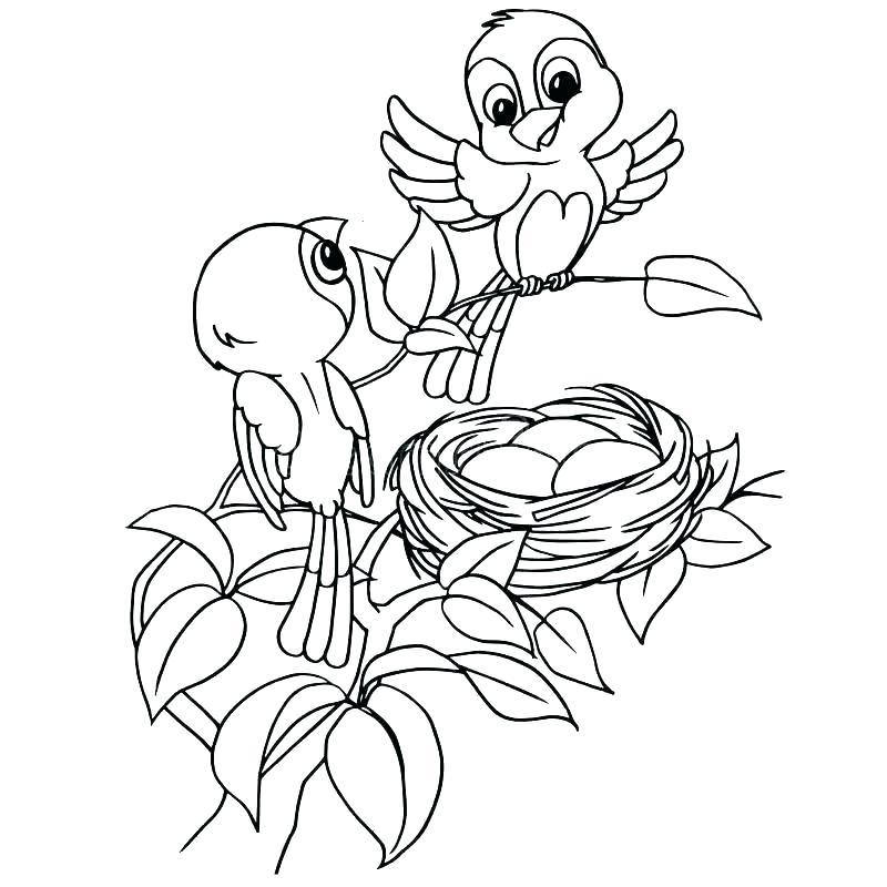 800x800 Bird Nest Coloring