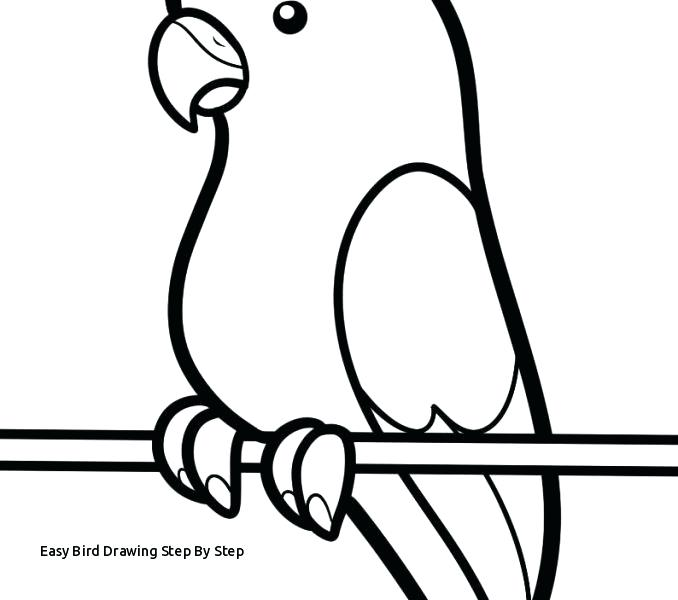 678x600 How To Draw A Easy Bird