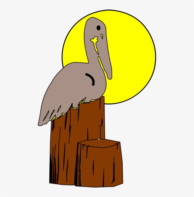 820x830 Bird Nest Brown Pelican Drawing Animal