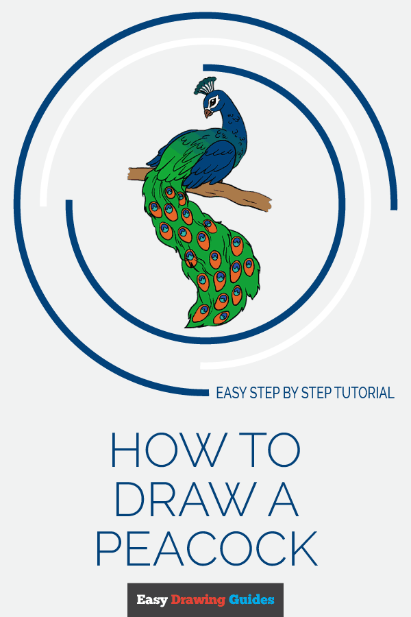 600x900 How To Draw A Peacock In A Few Easy Steps Easy Drawing Guides