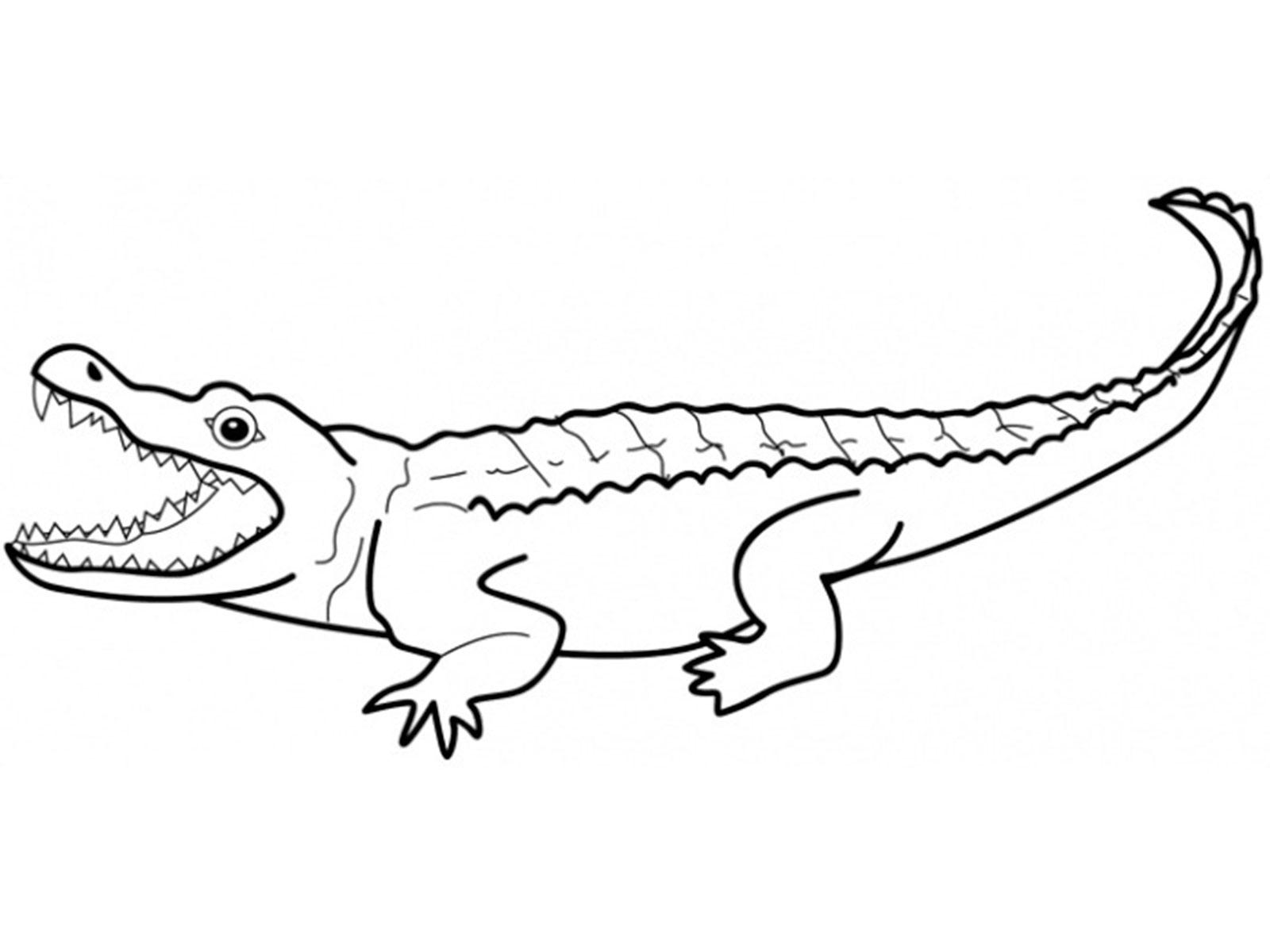 Nile Crocodile Drawing