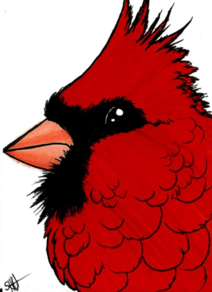 Northern Cardinal Drawing