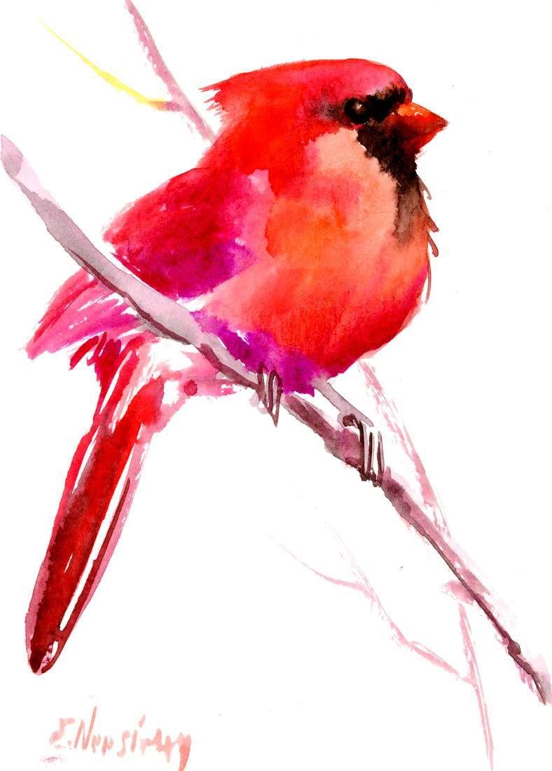 788x1100 northern cardinal bird x watercolor birds cardinal