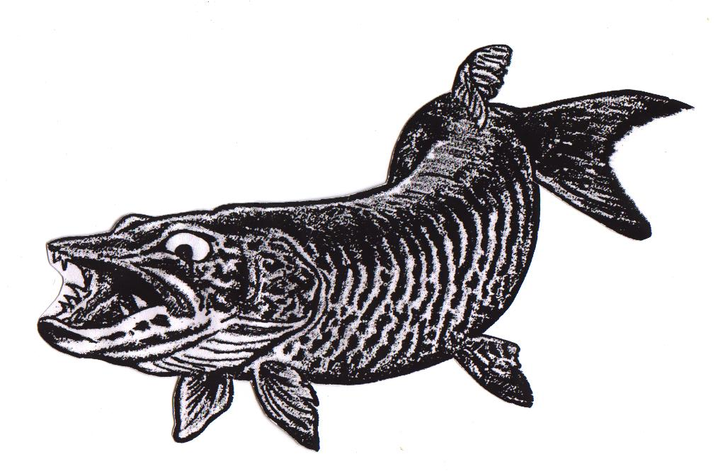1024x672 Fishing Drawing Muskie For Free Download