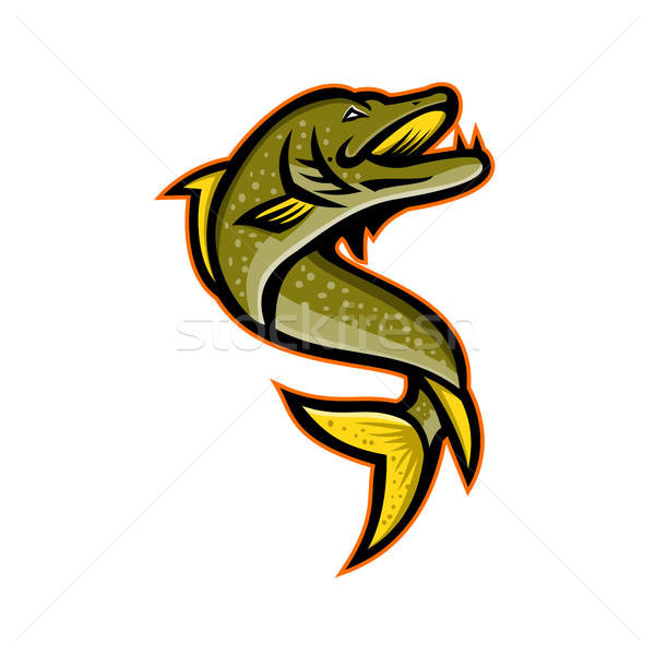 600x600 Northern Pike Sports Mascot Vector Illustration Aloysius