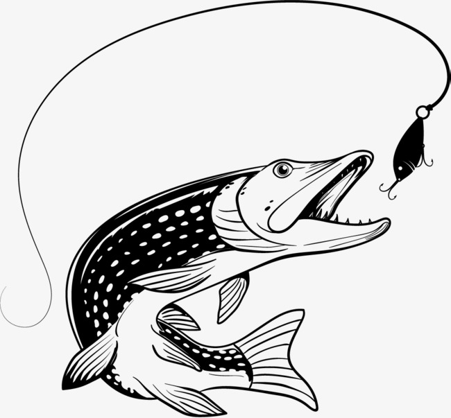 650x603 Carp Drawing Vector For Free Download