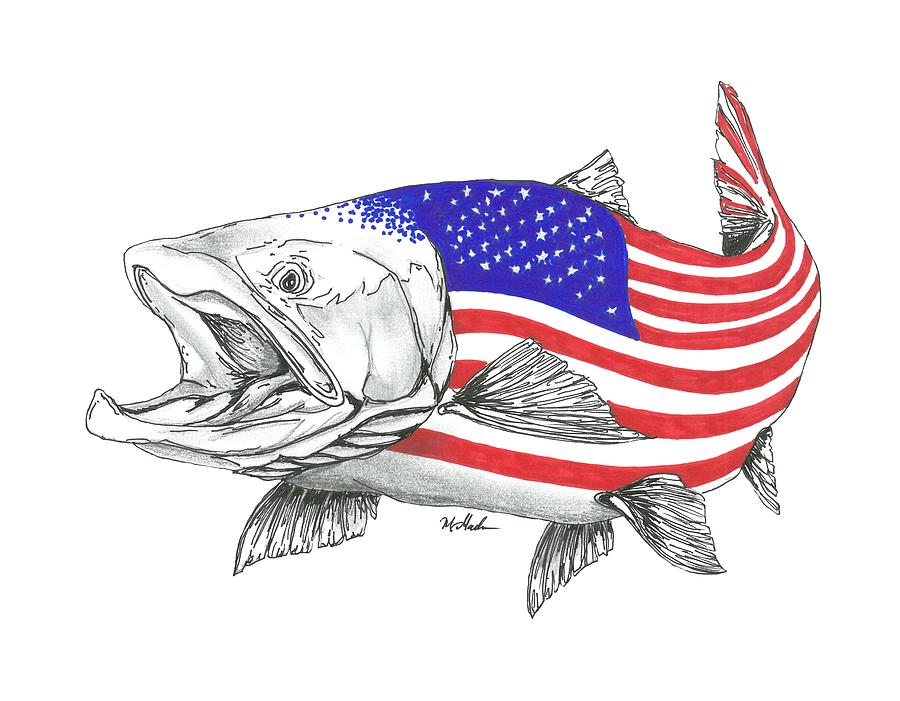 900x701 American Steel Head Salmon Drawing
