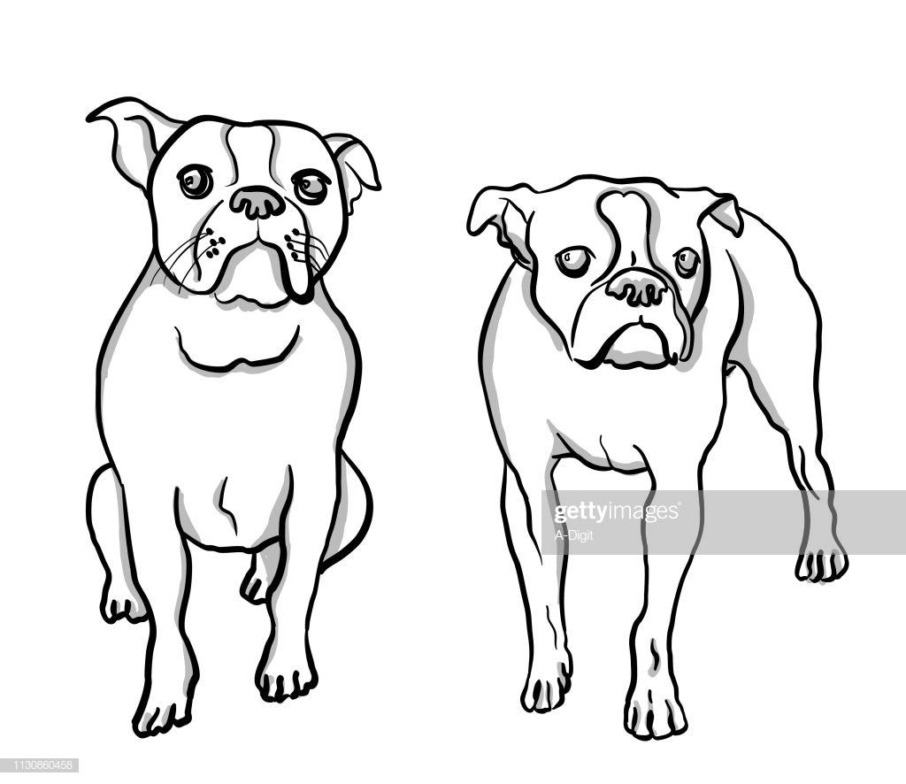 1024x886 Boston Terrier Pencil Drawing Line Realistic Cute Cartoon Head