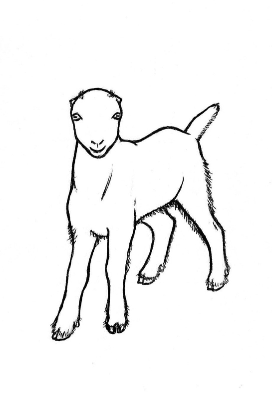 Nubian Goat Drawing