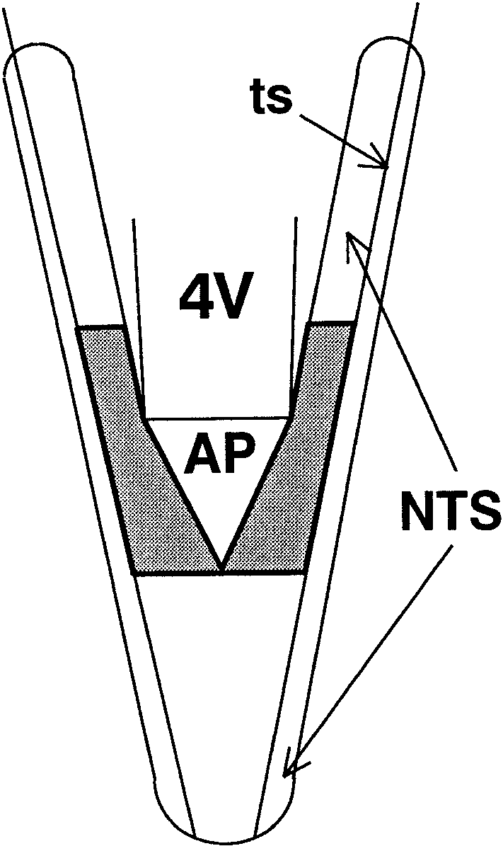 711x1195 Schematic Drawing Showing Portion Of The Nucleus Of The Solitary