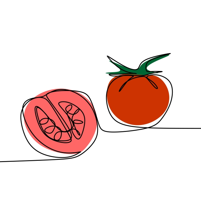 640x640 tomato continuous line drawing vector illustration, tomato, one