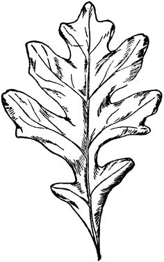 236x377 best oak leaf tattoos images awesome tattoos, drawings, oak