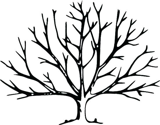 550x430 image result for easy tree outline drawings in image result