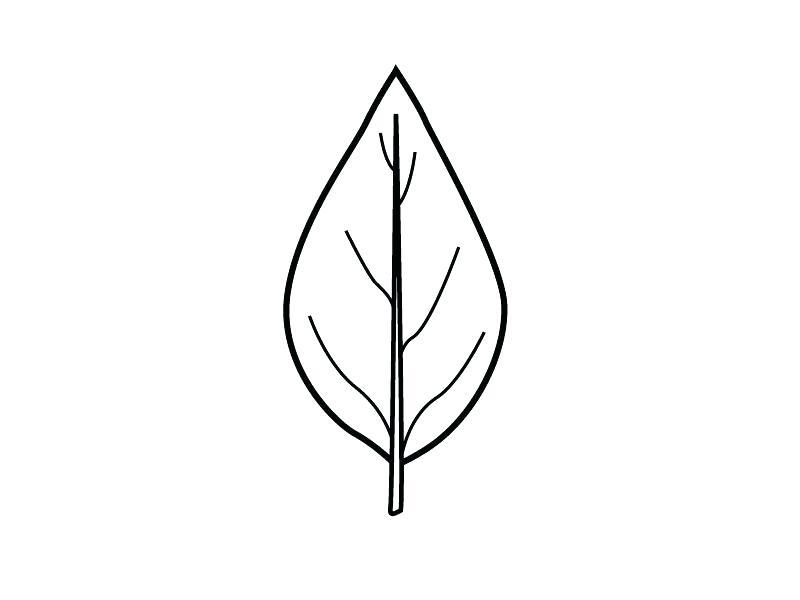 800x600 fall leaf outline printable fall leaf template oak leaf outline