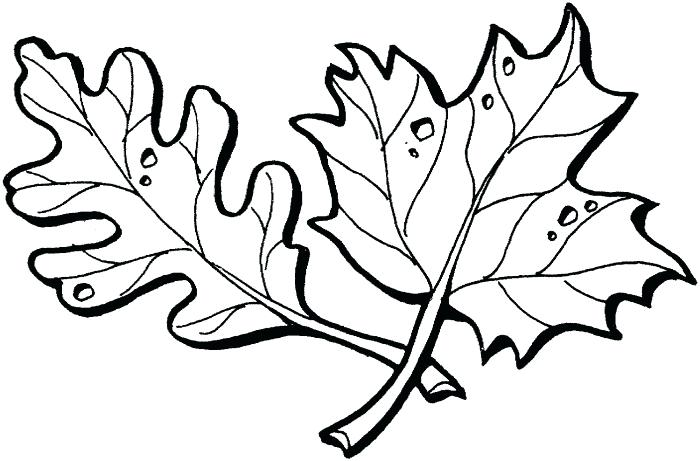 700x461 leaf outline oak leaf template outline maple leaf outline drawing