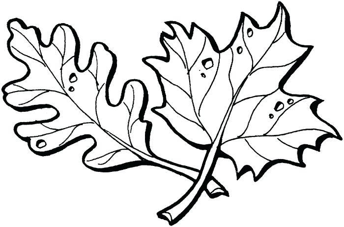 700x461 leaf outline oak leaf template outline maple leaf outline drawing