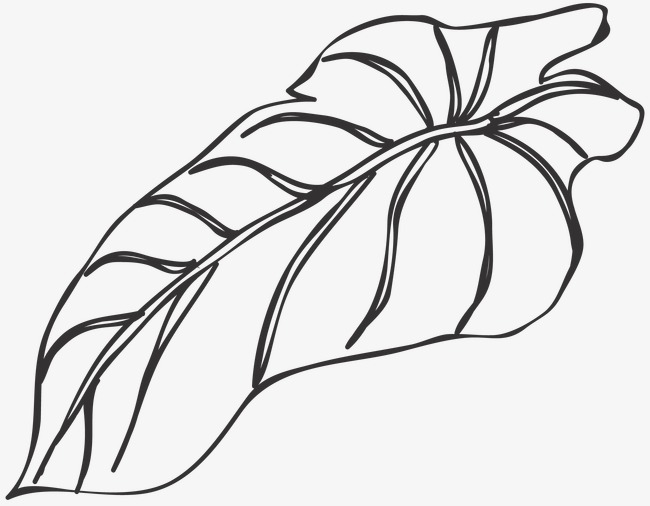 650x506 Huge Collection Of 'leaves Line Drawing' Download More Than