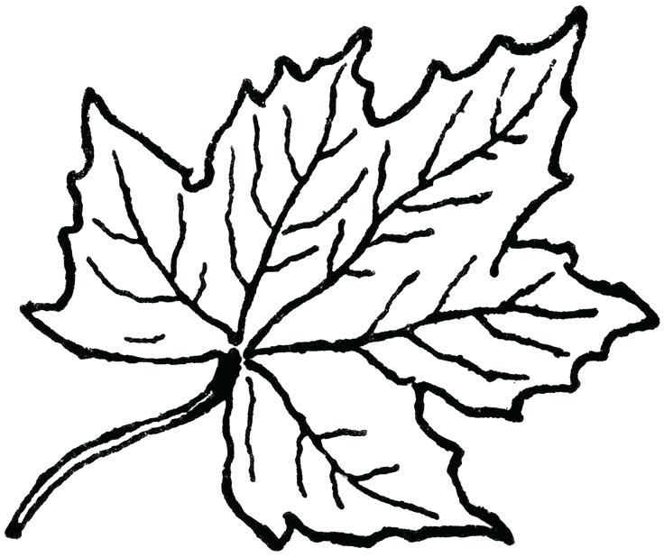 736x618 leaf outline oak leaf template outline maple leaf outline drawing