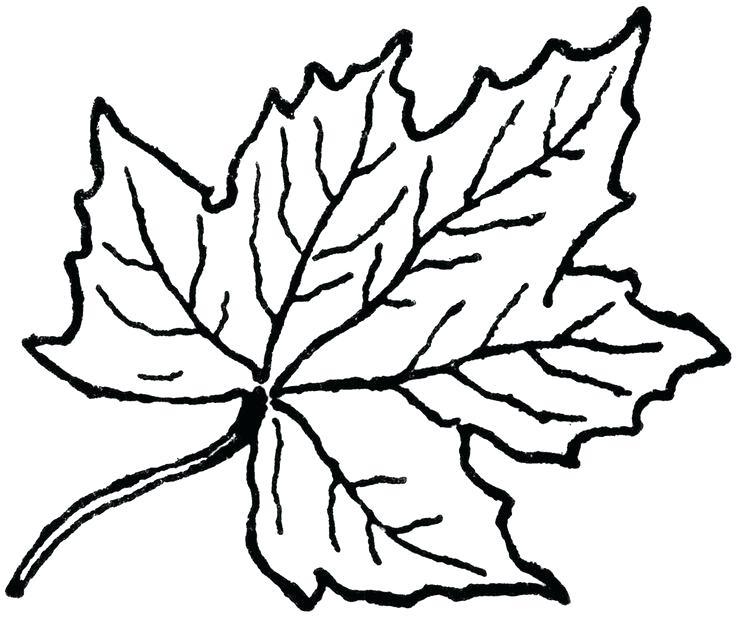 736x618 leaf outline oak leaf template outline maple leaf outline drawing