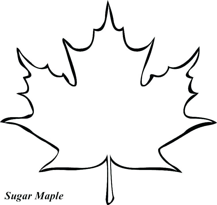 756x714 oak leaf outline jungle oak leaf outline image