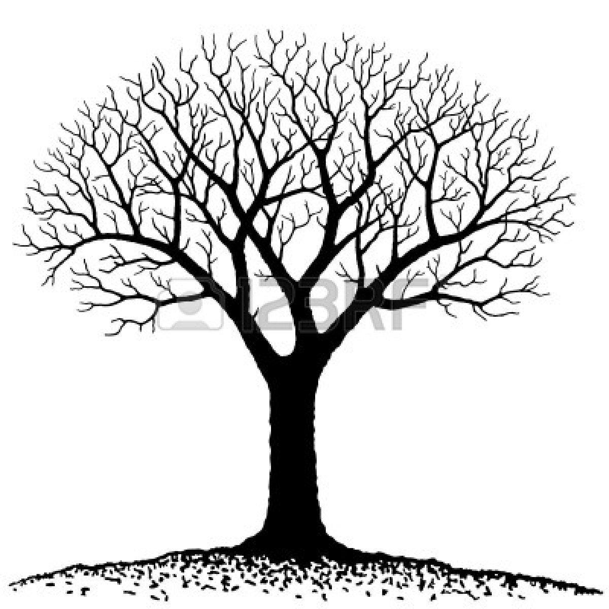 Oak Tree Branch Drawing