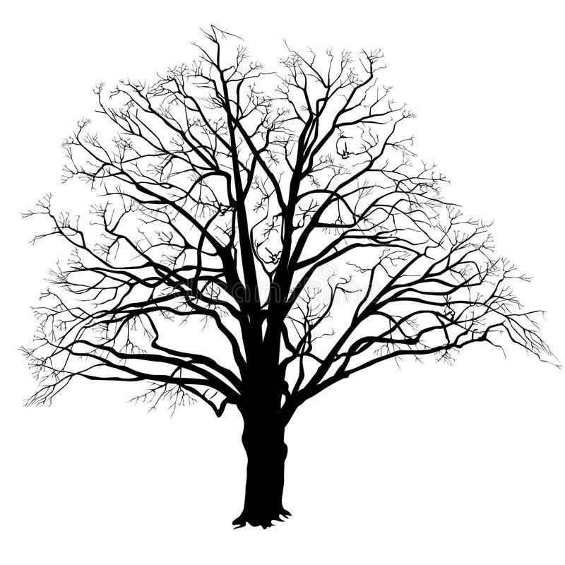 800x800 oak tree silhouette oak tree silhouette with fallen leaves black