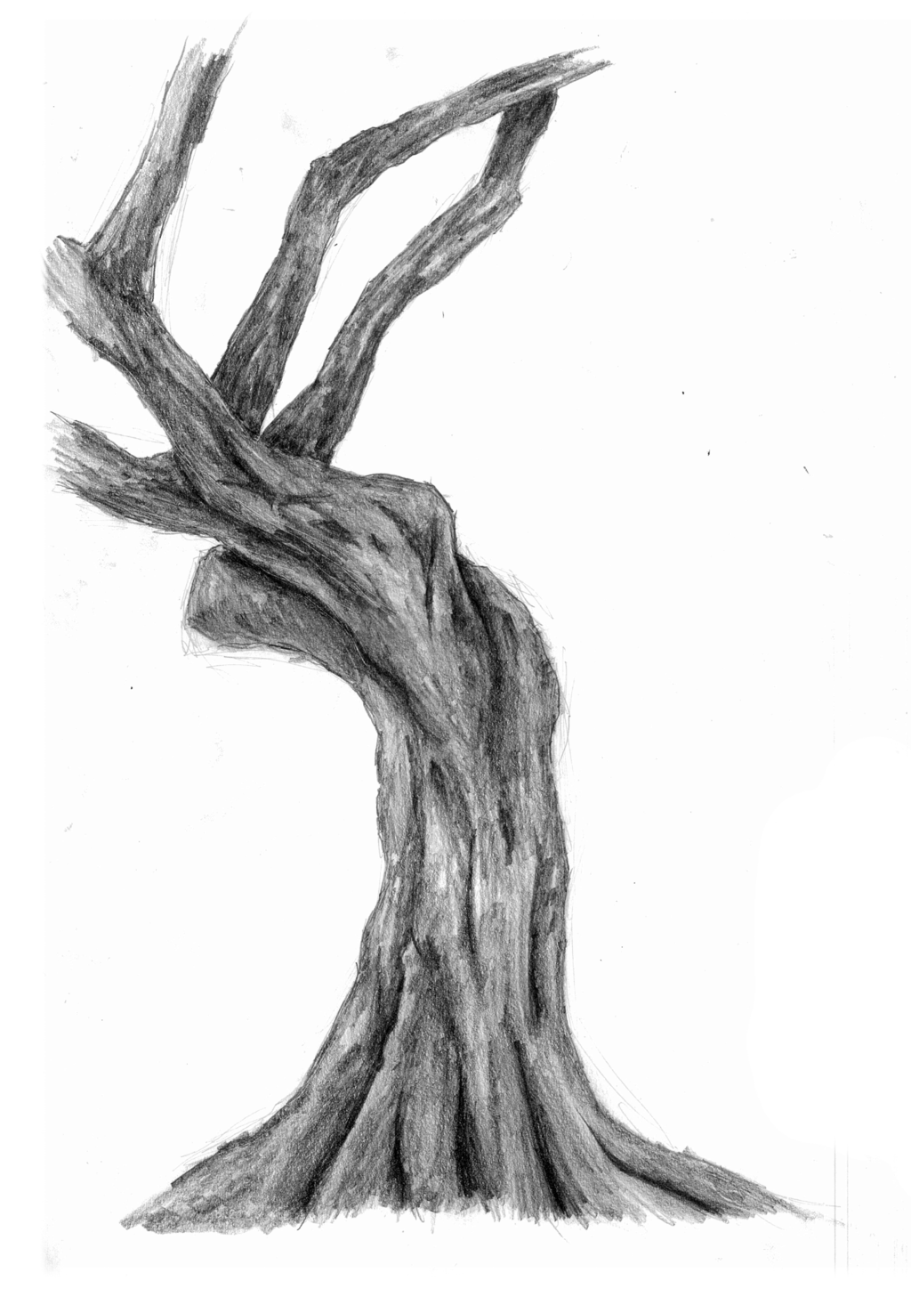 1024x1448 Twisted Drawing Twisted Oak For Free Download
