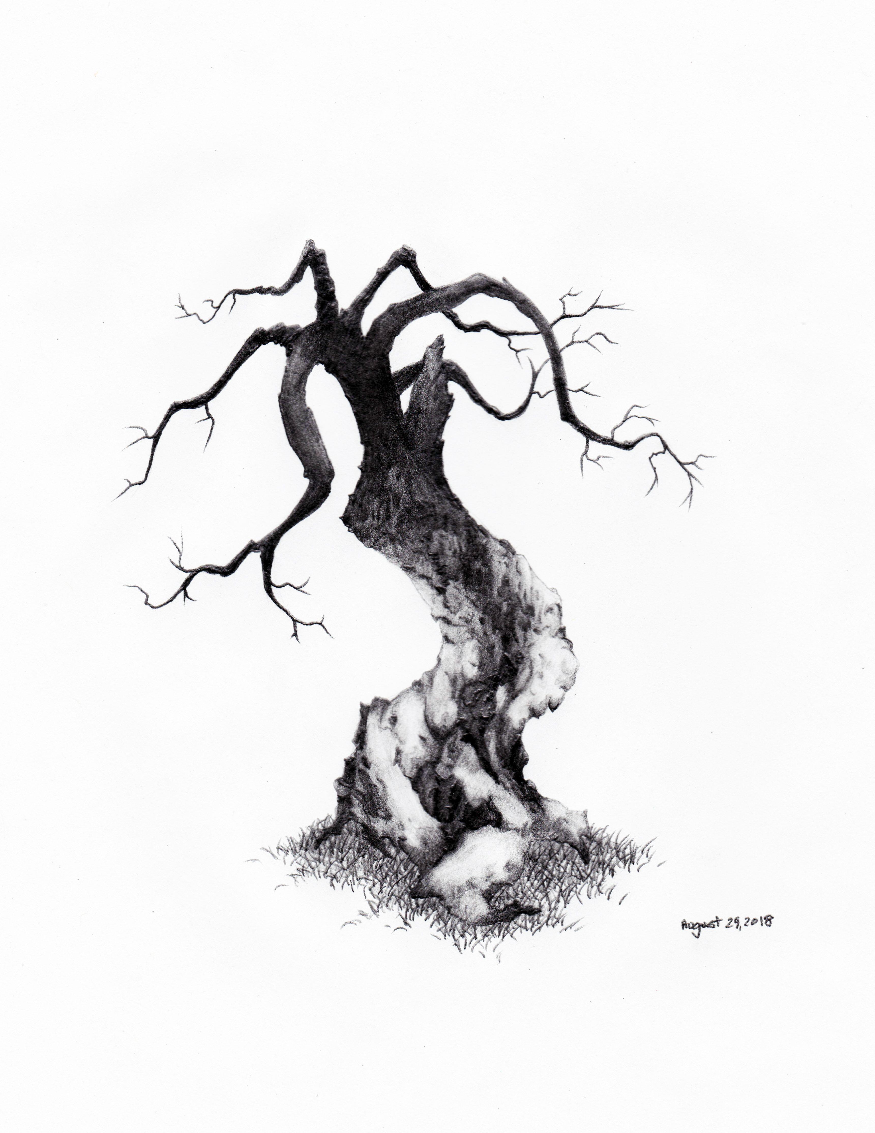 3441x4454 Daily Tree Sketch