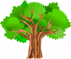 250x208 Download White Oak Tree Drawing Clipart Free Clip Art Images