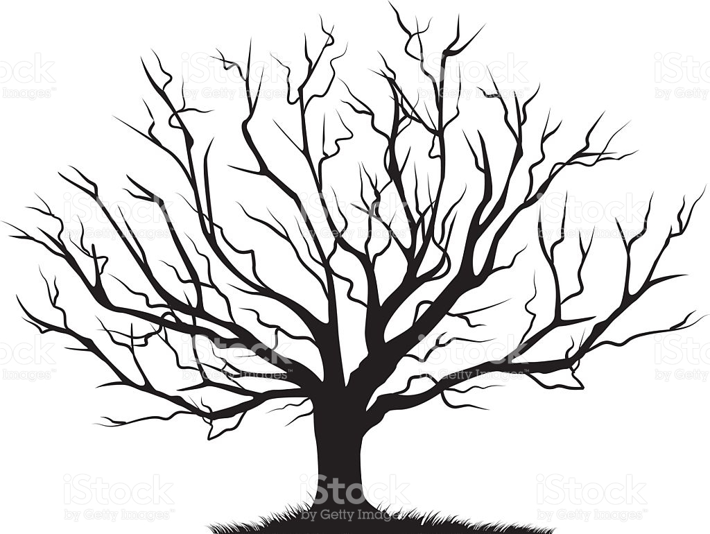 1024x770 Images Of Bare Tree Drawing