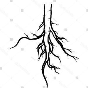 300x300 Oak Tree Roots Frame Artistic Banner