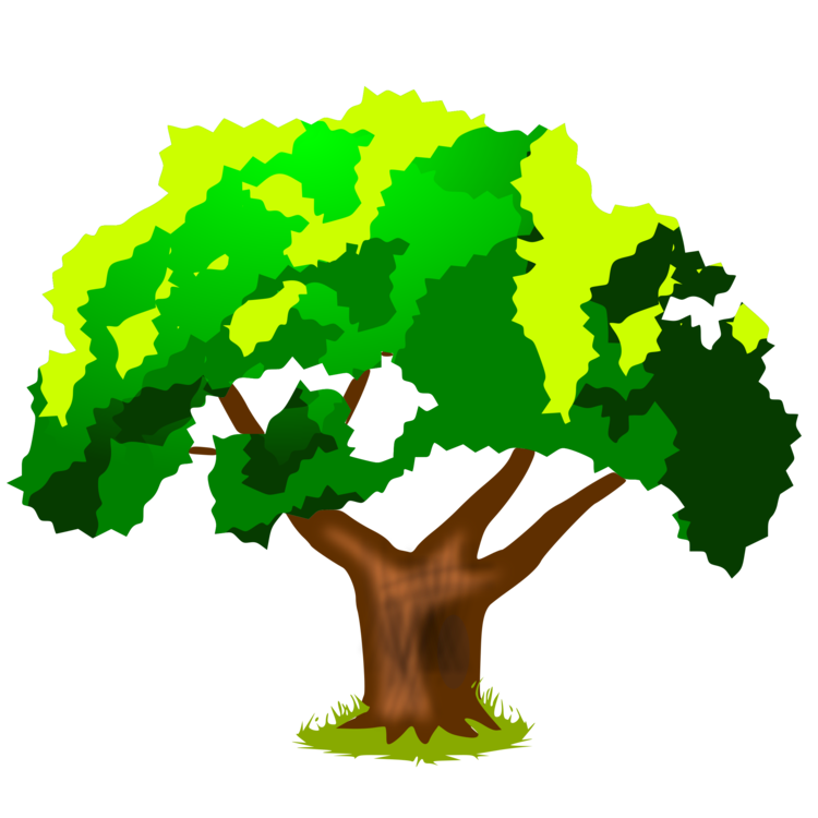 750x750 Tree Elementary School Drawing Oak Cc0