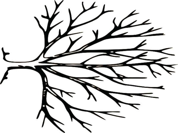 600x448 Oak Tree Line Drawing