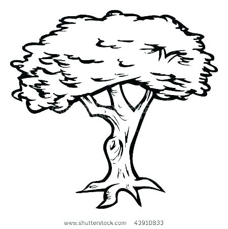 450x453 Tree Outline Drawing