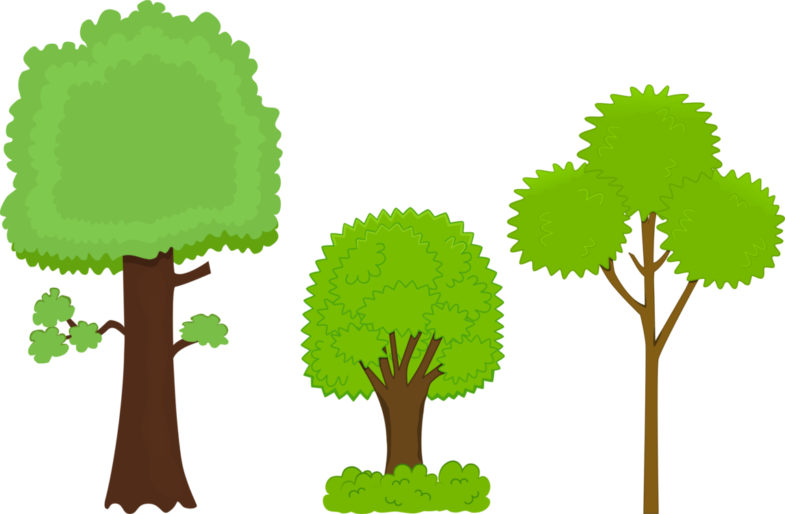 1146x750 Bark Drawing Tree Transparent Png Clipart Free Download