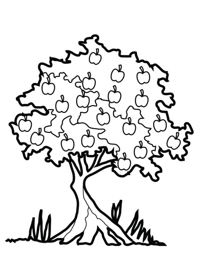 679x905 oak tree coloring sheet fabulous how to draw trees and oak trees