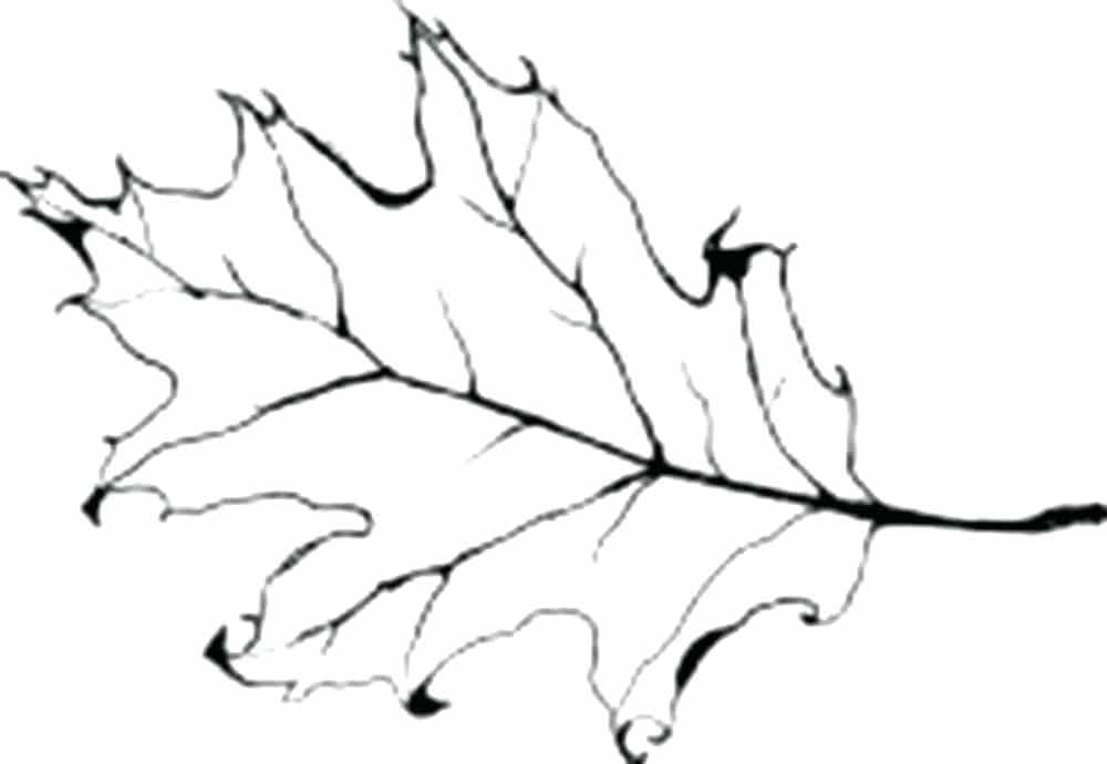 1000x690 oak leaf outline oak leaf outline x oak leaf outline template