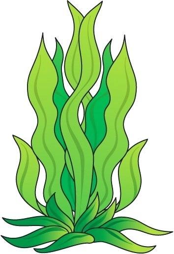 354x517 how to draw sea plants marine seaweeds sea flora ocean plants