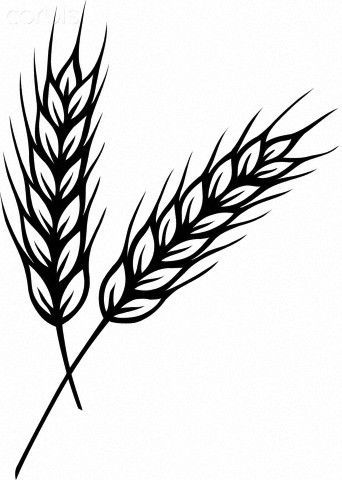 c5494c2a66a0a 342x480 wheat outline tattoo ing wheat drawing, wheat tattoo, drawings