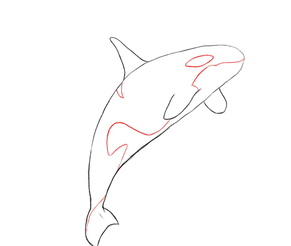 970x822 how to draw a killer whale boredom whale drawing, whale