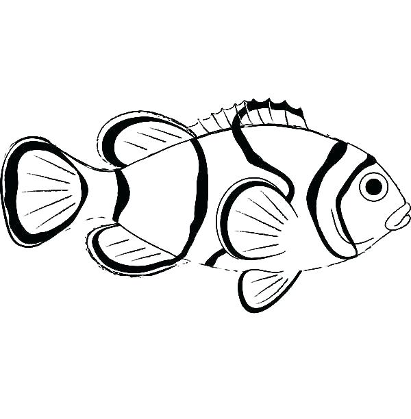 600x612 clown fish pictures to color clown fish coloring