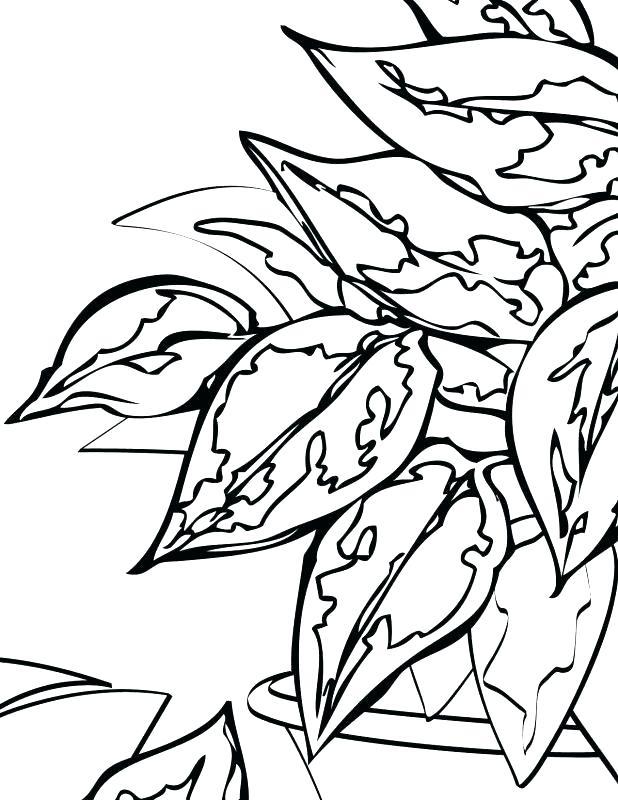 618x800 rainforest plants coloring pages tropical plants coloring pages