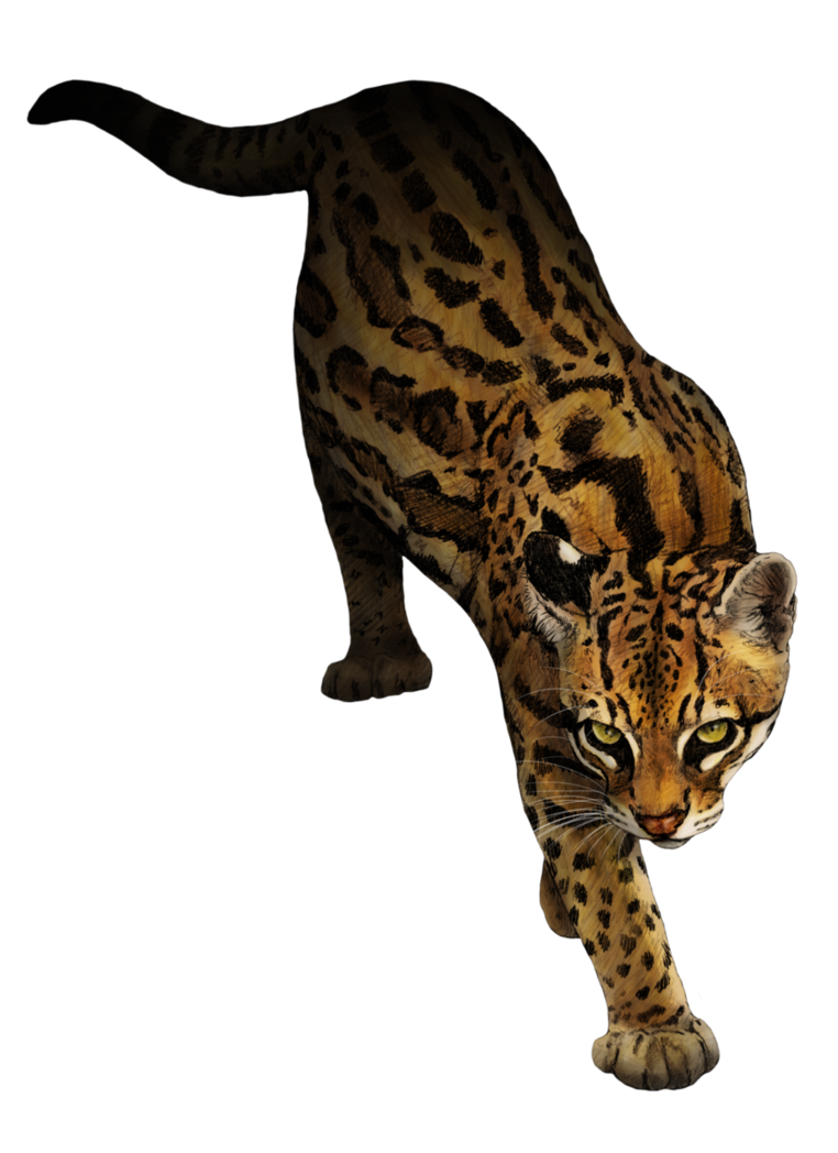762x1048 collection of free cougar drawing ocelot download on ui ex