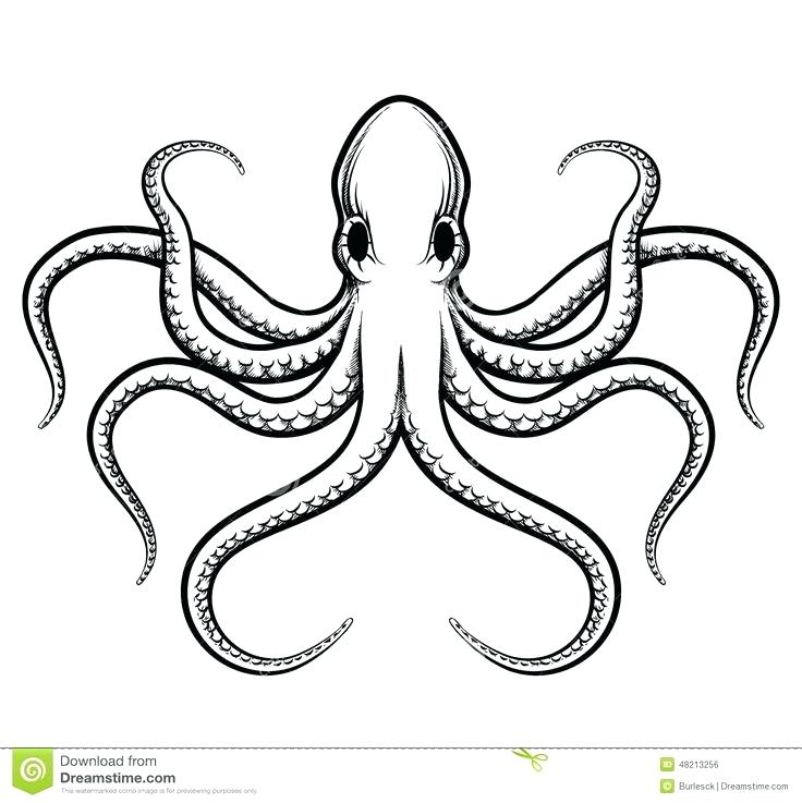 736x737 how to draw octopus octopus drawing octopus draw something