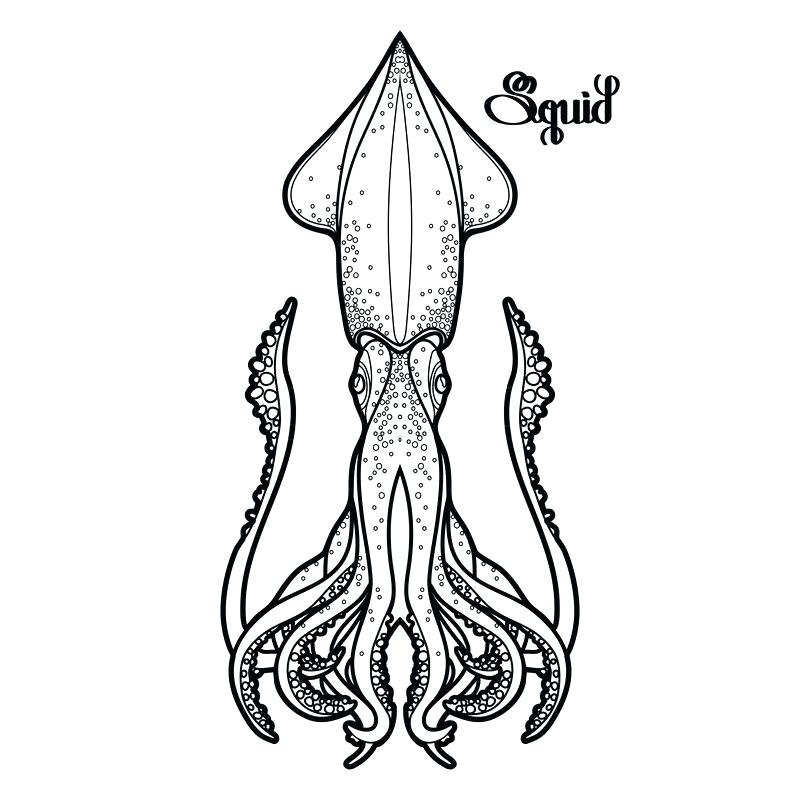 800x800 drawing of a squid squid octopus vector drawing doodle cutest