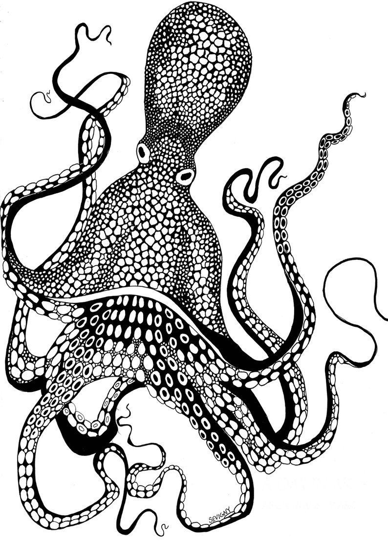 Octopus Ink Drawing