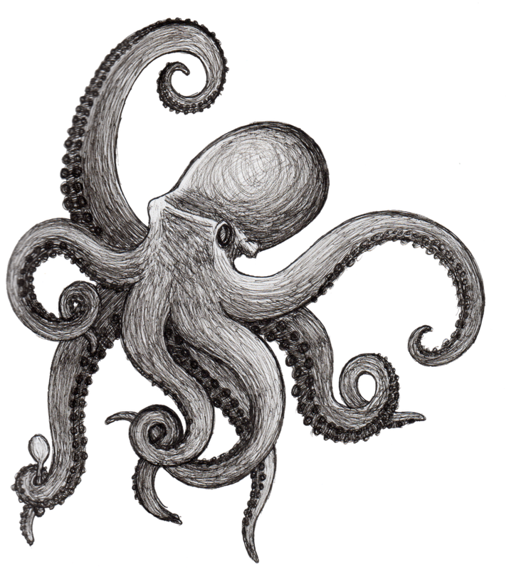 Octopus Tattoo Drawing